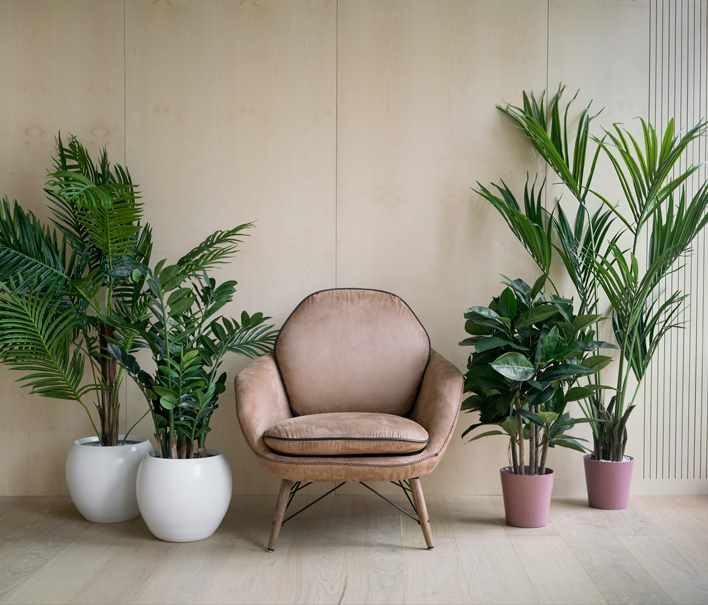 Indoor Hired plant Display -Business Commercial Property Office Indoor Plant Supplier and Maintenance Service in Derby
