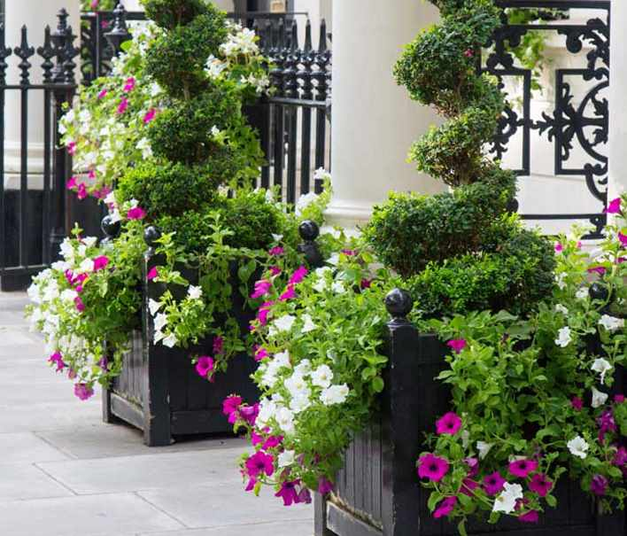 Outdoor plant Display - Commercial Property Outdoor Plant Display Supplier and Maintenance Service in Derby