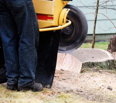 Tree Stump Grinder in Action - Example of our Derby Tree Stump Grinding and removal Services