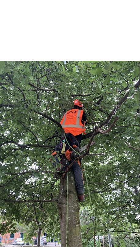 tree surgery derby