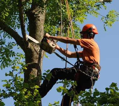 Tree Surgery Burton on Trent - Tree Inspections - Pruning and Maintenance