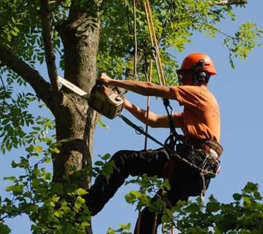 Tree Surgery Derby - Tree Inspections - Pruning and Maintenance